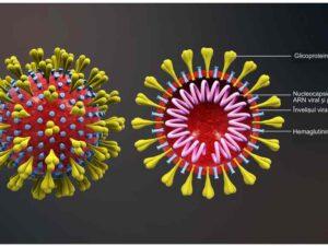 Coronavirus vazut in sectiune